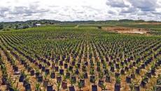 """( da """"Terra"""" quotidiano ecologista 18 novembre 2010) La centrale elettrica Unigrà (49,6 MW elettrici) realizzata a Conselice (RA), è un esempio illuminante di ciò che non si deve fare […]"""
