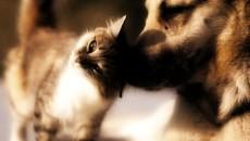 """""""Sono in arrivo 330.000 euro di finanziamenti regionali destinati alle Aziende USL dell'Emilia-Romagna per realizzare interventi di prevenzione del randagismo attraverso la sterilizzazione di cani e gatti abbandonati nelle diverse […]"""