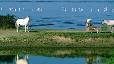 In coda all'approvazione della legge regionale di riorganizzazione del sistema dei Parchi e delle Aree protette in Emilia-Romagna, di cui la consigliera regionale dei Verdi Gabriella Meo era relatrice, è […]
