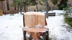 Dopo l'abbattimento dei pini di viale Oriani di ieri ed il tentato abbattimento di quelli in piazza San Francesco, bloccato sul nascere dalle proteste dei residenti, i consiglieri del Gruppo […]
