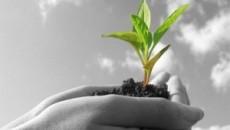 L'agricoltura è uno dei pochi settori produttivi di economia reale, nel senso che produce la base della vita, il cibo e, nello stesso tempo, opera a salvaguardia del territorio e […]
