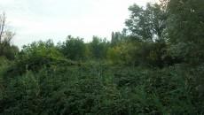 Il Sottosegretario alla Presidenza della Regione Alfredo Bertelli ha risposto all'interpellanza della consigliera regionale dei Verdi Gabriella Meo sullo spianamento del terreno e lo sradicamento di alberi e arbusti nell'Area […]