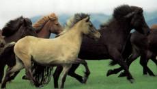 Il 14 settembre scorso si è regolarmente svolta l'asta pubblica per la vendita dei 17 cavalli e 2 asini provenienti dal Centro di Incremento Ippico di Ferrara, dismesso dalla Regione […]