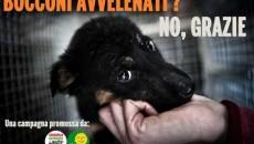 """I consiglieri regionali del gruppo assembleare Sel-Verdi Gabriella Meo e Gian Guido Naldi hanno depositato il progetto di legge """"Norme per la lotta agli avvelenamenti di animali domestici e selvatici […]"""