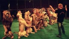 """""""Innanzi tutto desidero ringraziare il Presidente dell'Ente Nazionale Circhi che mi permette di tenere viva la polemica contro i circhi che utilizzano animali."""" In questo modo la consigliera regionale dei […]"""