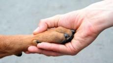I VERDI: IL PREMIO ADOLF HITLER? OFFENDE MONDO ANIMALISTA E VITTIME DEL NAZISMO Ami gli animali e ti adoperi per proteggere i loro diritti? Allora quest'anno potresti vederti assegnato il […]