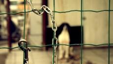 Il prossimomartedì 26 febbraio alle ore 10,30presso la sala polivalente 'Guido Fanti' dell'assemblea legislativa della Regione Emilia-Romagna si terrà l'udienza conoscitiva (aperta al pubblico) della commissione 'Politiche per la salute […]