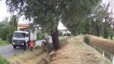 """""""Che in questi tempi di tagli ai bilanci degli Enti locali e di spending review gli alberi, e più in generale tutto il verde pubblico, siano visti solo come un […]"""