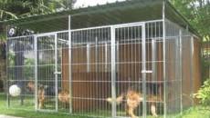 """""""L'emendamento approvato ieri con la legge finanziaria regionale non cancella assolutamente l'obbligo per i proprietari dei cani di predisporre box adeguati per i propri animali. Bartolini ieri deve aver visto […]"""