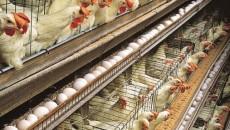 """""""Ho chiesto che mi vengano forniti tutti i dati sui campionamenti ematici effettuati dalle Ausl emiliano-romagnole negli allevamenti di pollame durante i primi quattro mesi del 2013 allo scopo […]"""