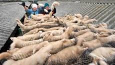 """""""Oggi ho presentato, assieme a colleghi di maggioranza e di opposizione, una proposta di legge regionale per vietare l'allevamento di animali da pelliccia in Emilia-Romagna, proposta elaborata su sollecitazione della […]"""