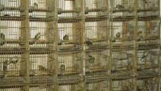 Durante la seduta odierna dell'Assemblea legislativa la consigliera regionale dei Verdi Gabriella Meo ha rivolto un'interrogazione a risposta immediata all'Assessore all'Agricoltura Tiberio Rabboni sul tema dell'uccellagione e dell'utilizzo dei richiami […]