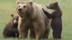 """""""La morte dell'orsa Daniza, uccisa dall'anestetico utilizzato per catturarla, segna il punto più basso raggiunto dall'uomo nel suo rapporto con la natura e con gli altri animali e sorprende che […]"""
