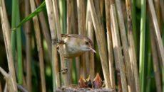 «Le motivazioni dell'assessore regionale dell'Emilia Romagna a giustificazione dell'apertura della stagione di caccia nonostante la gravissima situazione di siccità che ha colpito la Regione con la fauna rimasta senza acqua […]