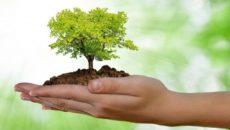 Apologo provvisorio ed irriverente in tre atti sull'ecologismo italiano http://verdilugo.blogspot.it/2017/09/lalbero-che-cade-e-la-foresta-che-cresce.html