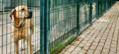 APERTO UN CONFRONTO SU PROPOSTE MIGLIORATIVE Si è tenuto stamattina l'incontro, chiesto dai Verdi, con l'ing. Lorenzo Cazzola, lavori pubblici Comune di Bologna, che si occupa dei progetti di mitigazione […]