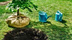 I Verdi presentano i candidati piantando un albero. Cinque Stelle e Lega negano V.I.A. per sovrapressione del gas. Comunicato stampa I Verdi presentano i propri candidati piantando un albero, mentre […]